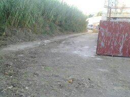 Limpieza y desbroce exterior de Pista de Baloncesto. [Fecha: 27/11/2013]
