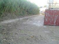 Limpieza y desbroce exterior de Pista de Fútbol Sala. [Fecha: 27/11/2013]
