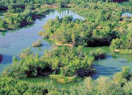 Los sotos y galachos del Ebro, cerca de ser reserva natural
