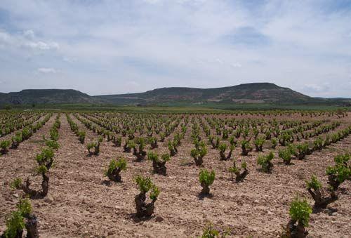 Campo de Cariñena, denominación de origen de Aragón