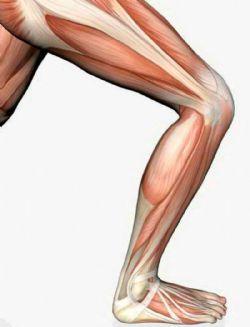 Desinserción de un músculo